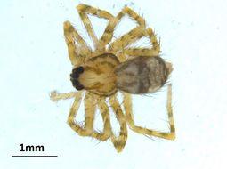 Image of wandering spiders