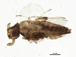 Image of Uscana