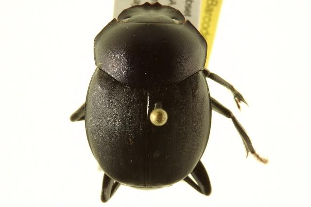 Image of Tumblebugs