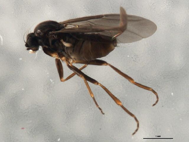 Image of Gymnophora