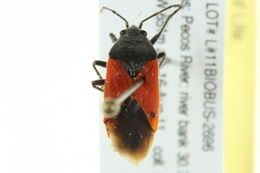 Image of red bugs