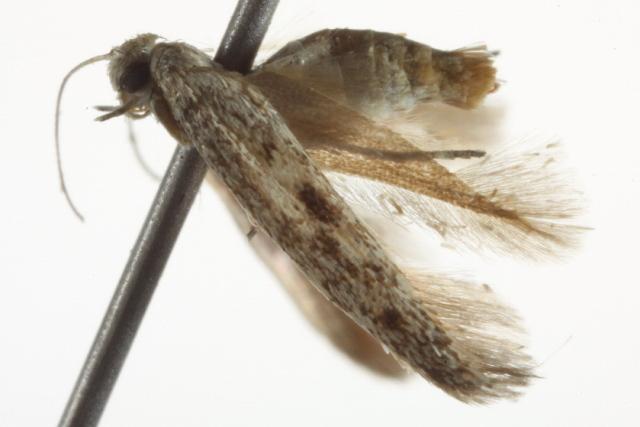 Image of Arotrura