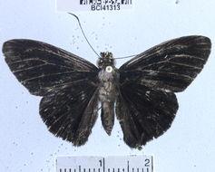 Image of Hyalothyrus