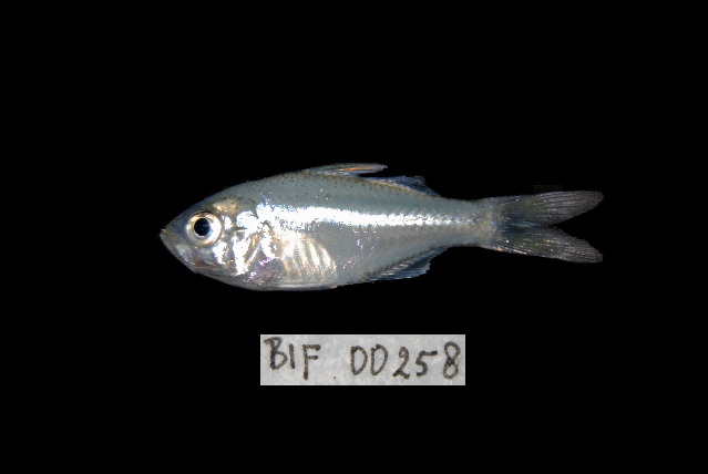 539.bifb bif 00258 1366865060 jpg