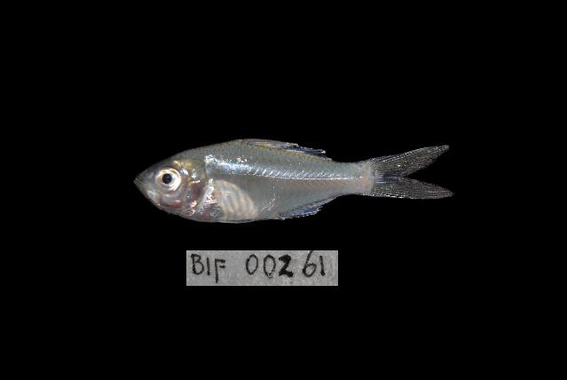 539.bifb bif 00261 1367375432 jpg