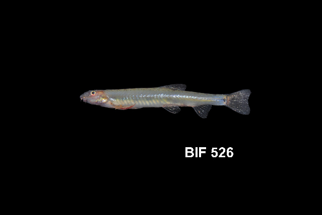 539.bifb bif 526 1387336996 jpg