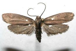 Image of uroBioLep01 BioLep18