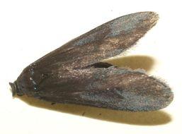 Image of uroBioLep01 BioLep1412