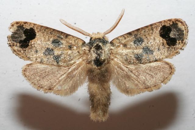 Image of dudBioLep01 BioLep281