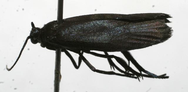 Image of uroBioLep01 BioLep13