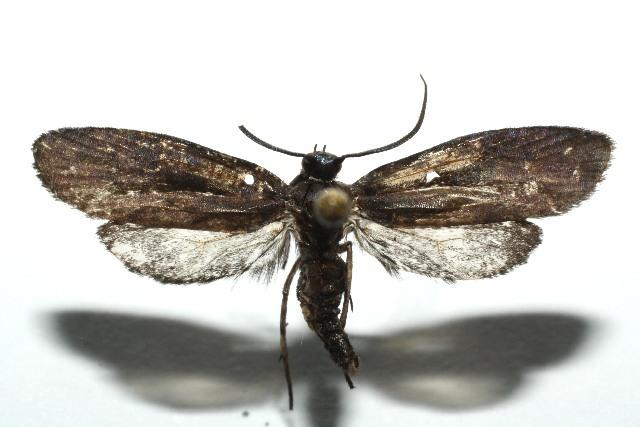 Image of uroBioLep01