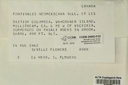 Image of fontinalis moss
