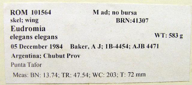 Image of Elegant Crested Tinamou