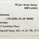 539.bromb bromb442 06   93880 b 1219159248 jpg.130x130
