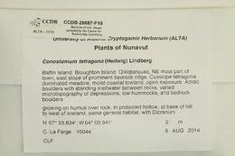 Image of Bartramiaceae
