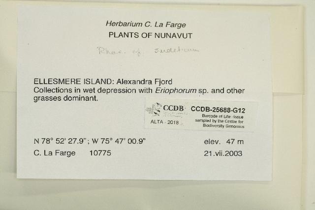 Image of Grimmiaceae