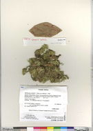 Image of Peat moss