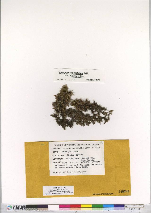 Image of sphagnum