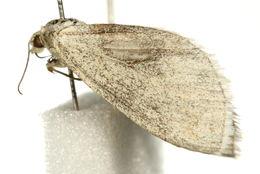 Image of Grey Carpet