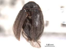 Image of Ectopria