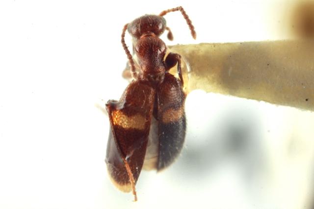 Image of Malporus