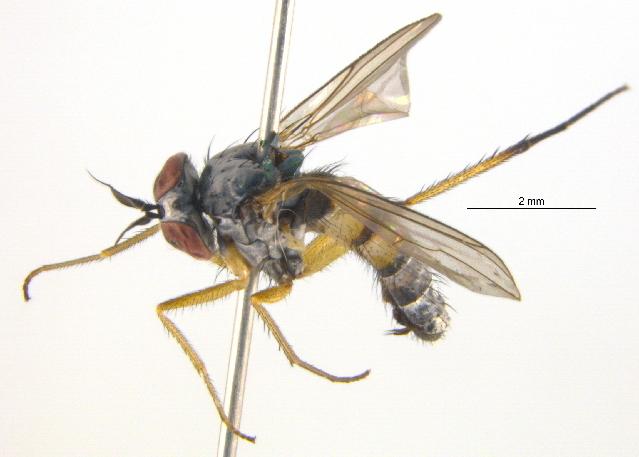 Image of Argyra