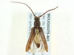 Image of twig pruner
