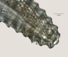 Image of <i>Lobocriconema warrenense</i>