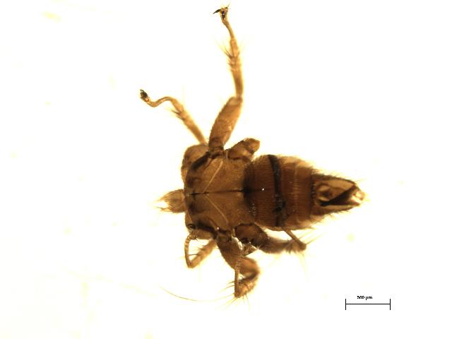 Image of Basilia