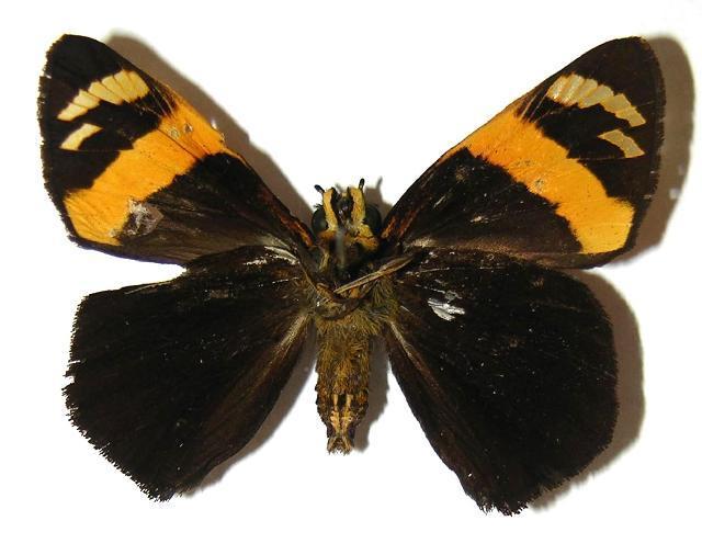 Image of Entheus