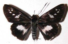 Image of Vettius