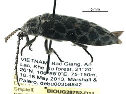 Image of forest stream beetles
