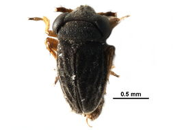 Image of jumping soil bugs