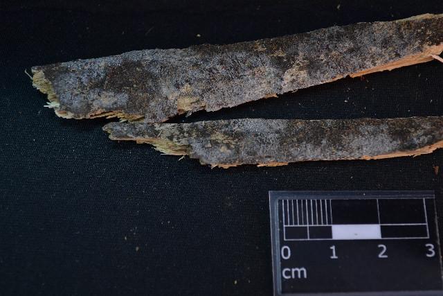 Image of Botryobasidium