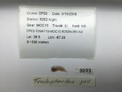 Image of Trachipterus