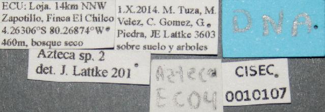 Image of Azteca