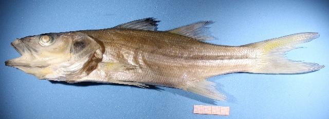 Image of robalos