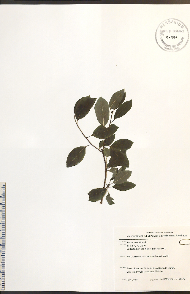 Image of catberry