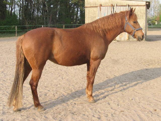 539.gbma horse006 1357753721 jpg