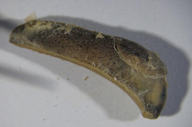 Image of milacids