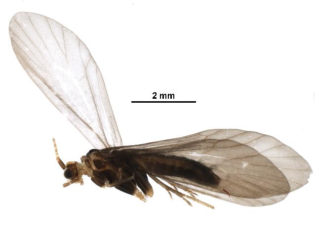 Image of Caloca