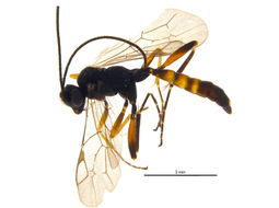 Image of Agrothereutes