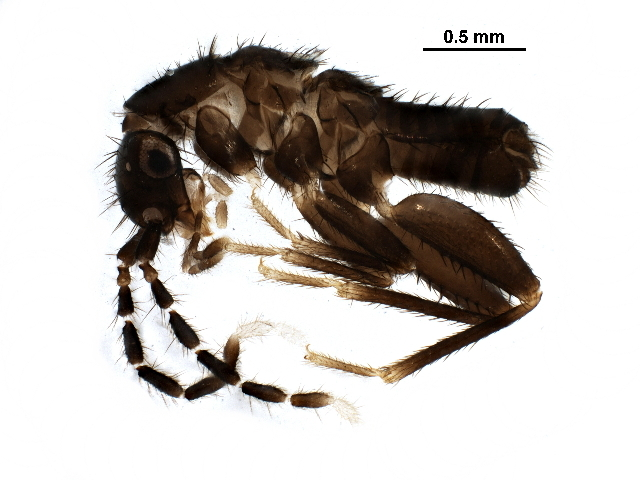 Image of angel insect