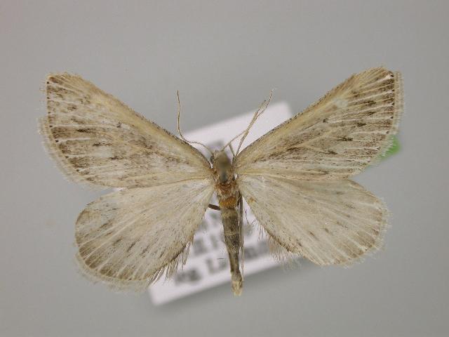 Image of Myinodes