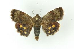 Image of Hyblaea