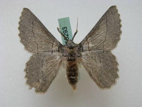 Image of Hypobapta