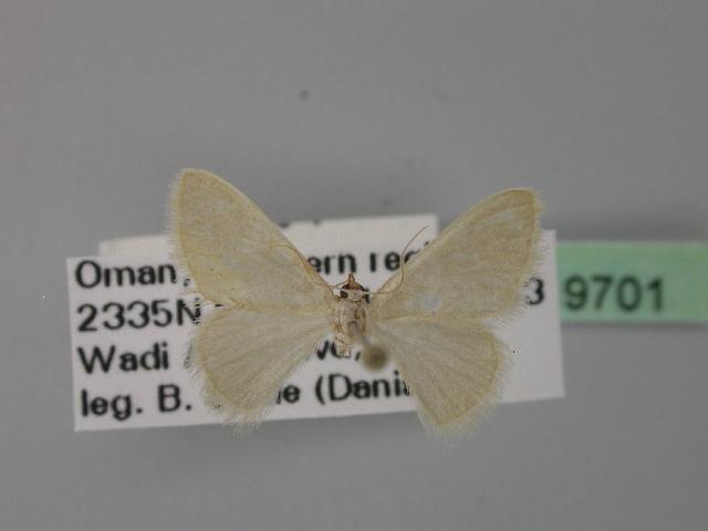 Image of Neromia