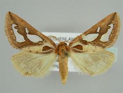 Image of <i>Axia nesiota</i> Reisser 1962
