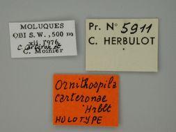 Image of <i>Ornithospila carteronae</i> Herbulot 1982