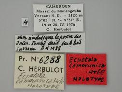 Image of <i>Ecpetala camerunica</i> Herbulot 1988
